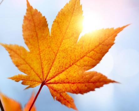 Autumn Leaves Wallpapers screenshot 4