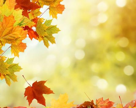 Autumn Leaves Wallpapers screenshot 3