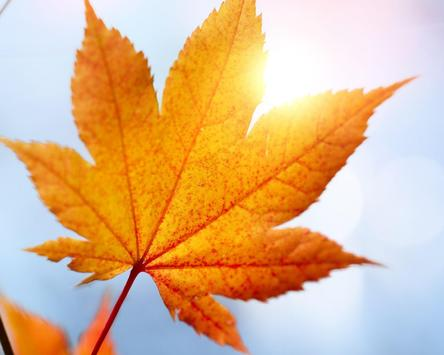 Autumn Leaves Wallpapers screenshot 4