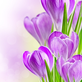 Spring Flowers Themes icon
