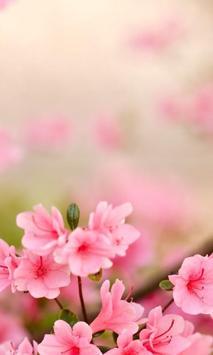 Spring Flowers Themes screenshot 2
