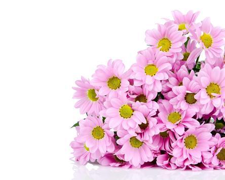 Spring Flowers Themes screenshot 4