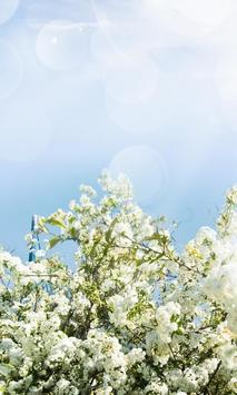 Spring Flowers Themes apk screenshot