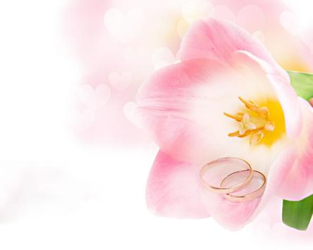 Spring Flowers Wallpapers apk screenshot