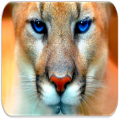 Cougar sounds icon