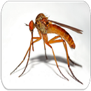 Mosquito sounds APK