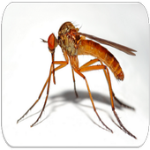 Mosquito sounds icon