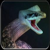 Snake sounds icon