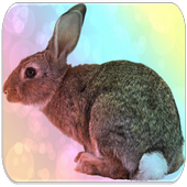 Rabbit sounds icon