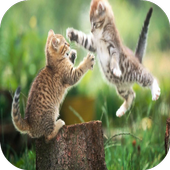 Cat Fight Wallpapers icon