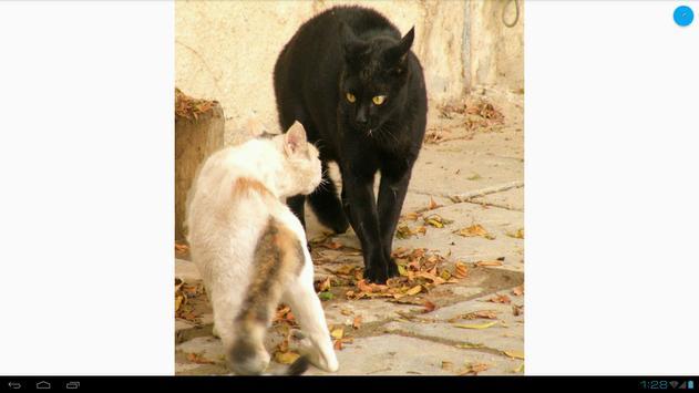 Cat Fight Wallpapers apk screenshot