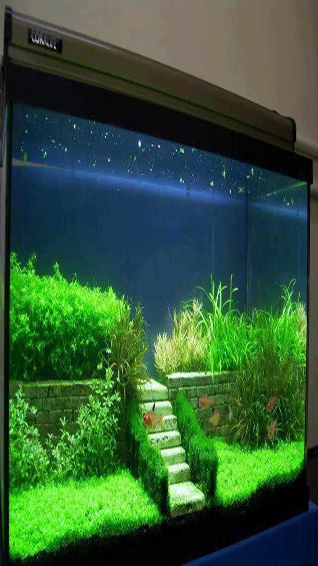 Diy Aquarium Decorations Ideas For Android Apk Download