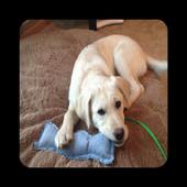 DIY Dog Toys Ideas icon