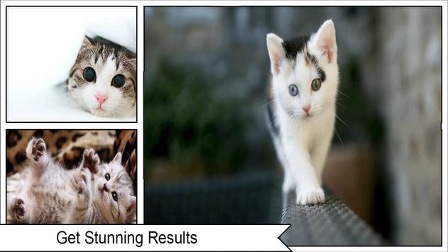 cat wallpaper screenshot 2