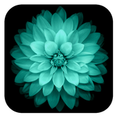 Galaxy Flowers Live Wallpaper icon