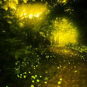 Fireflies Live Wallpapers icon