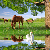 Horses Live Wallpapers icon