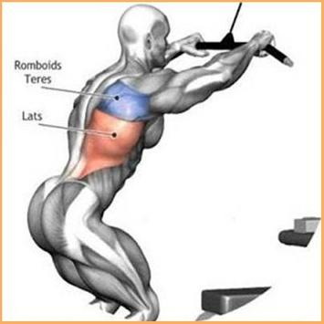 Bodybuilding Muscle Exercises for Android - APK Download