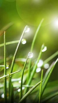 Nature Water Drops Theme screenshot 2