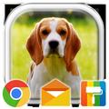 Beagle Puppy Adorable Theme
