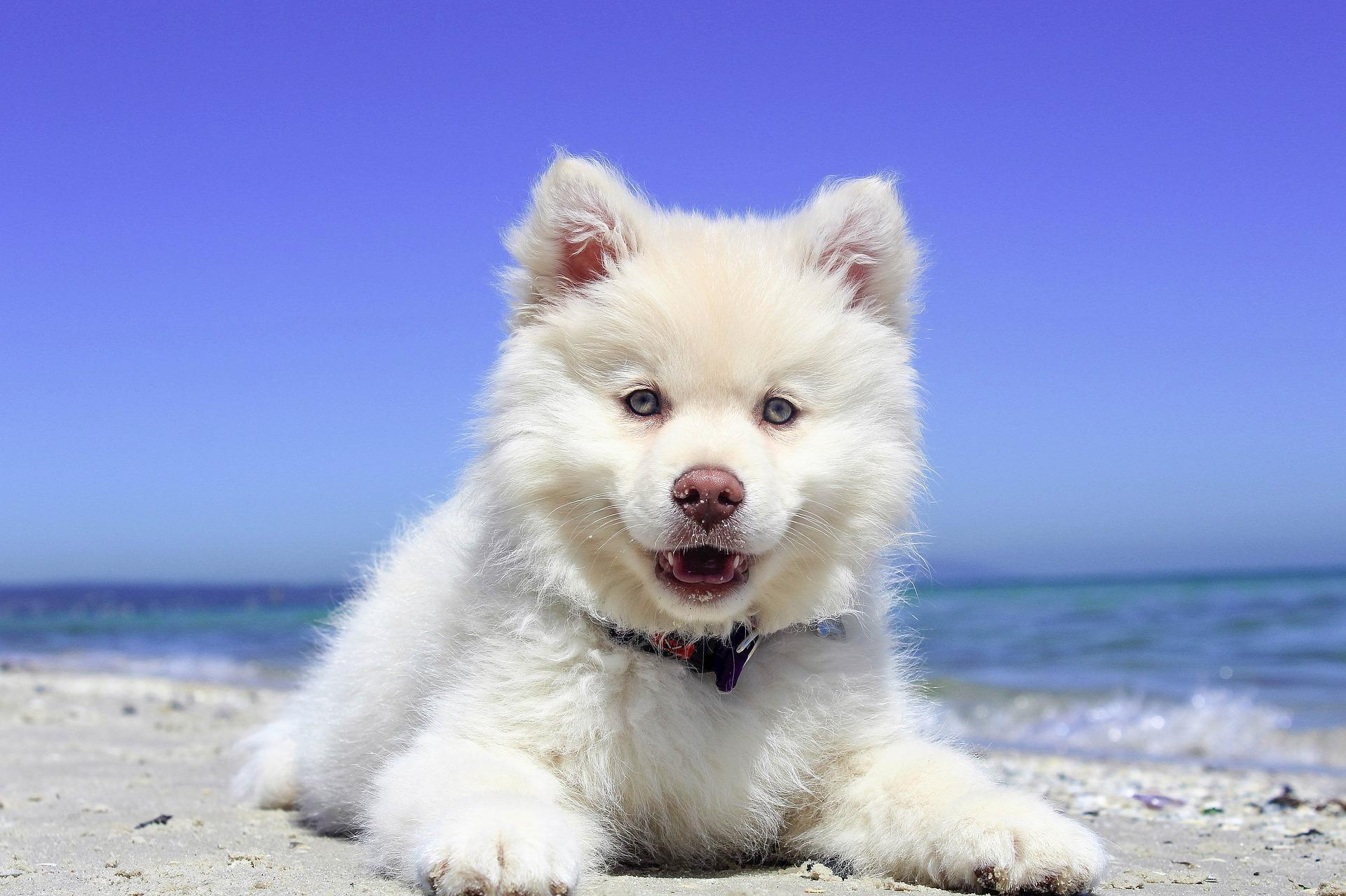 Cute Dog Wallpaper Hd For Android Apk Download
