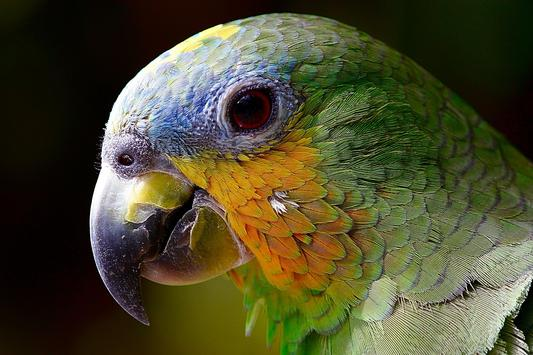Macaw Wallpaper HD poster ...