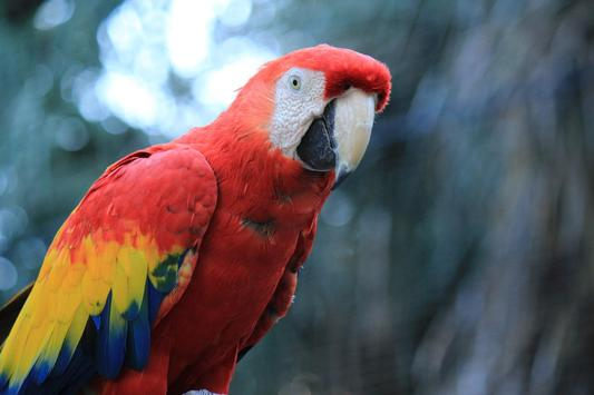 ... Macaw Wallpaper HD screenshot 2 ...