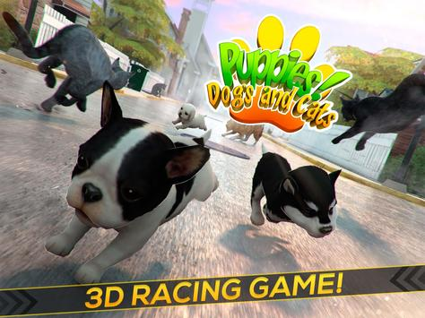 Puppies! Dogs and Cats Game apk screenshot