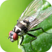 Insect Wallpapers icon