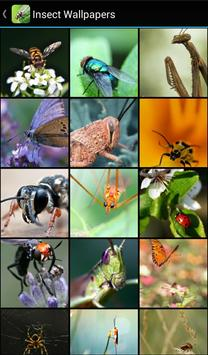 Insect Wallpapers poster
