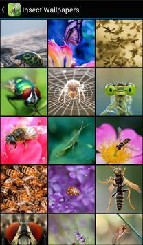 Insect Wallpapers apk screenshot