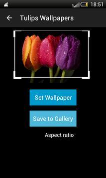 Tulips HD Wallpapers screenshot 3