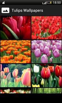 Tulips HD Wallpapers poster