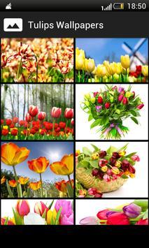 Tulips HD Wallpapers screenshot 1