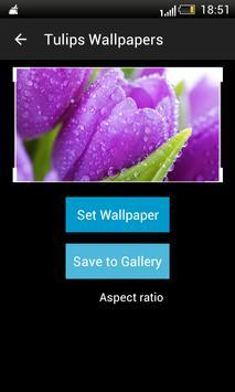 Tulips HD Wallpapers screenshot 2