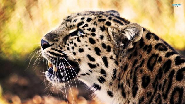 Leopard Wallpaper Pictures HD Images Free Photos poster