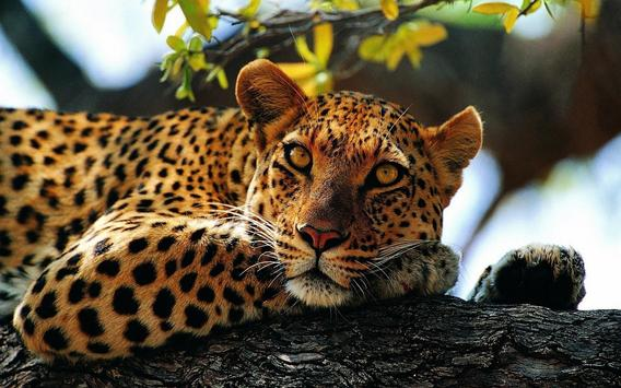 Leopard Wallpaper Pictures HD Images Free Photos screenshot 1