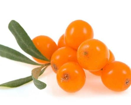 Sea Buckthorn Wallpapers apk screenshot