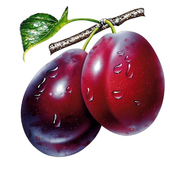Plum Wallpapers icon