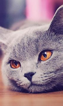 Kittens And Cats HD Wallpapers Theme poster