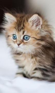 Kittens And Cats HD Wallpapers Theme screenshot 1