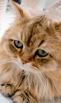 Kittens And Cats HD Wallpapers Theme screenshot 2