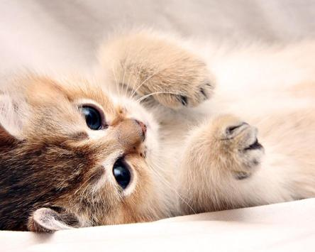 Kittens And Cats HD Wallpapers Theme screenshot 3