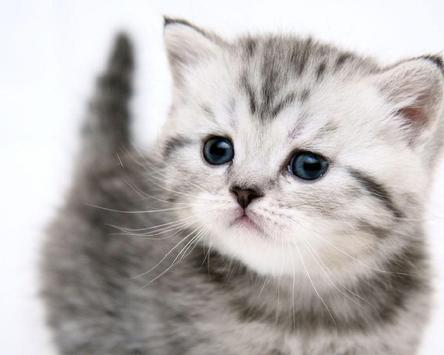 Kittens And Cats HD Wallpapers Theme screenshot 4