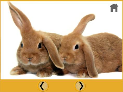 rabbits and games for kids screenshot 4