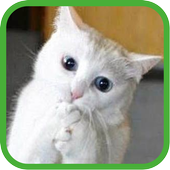Funny Cats Pictures icon