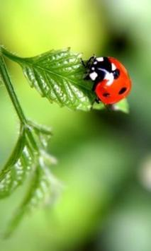 Ladybug Beauty Pictures poster