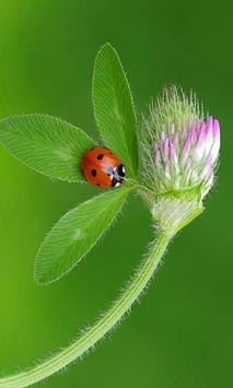 Ladybug Beauty Pictures apk screenshot