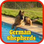 German Shepherd Wallpapers and Photos icon
