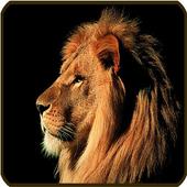 Lion Wallpaper icon